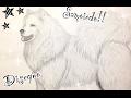 Disegno samoiedo   How to draw Samoyed   Art   Drawing dog  