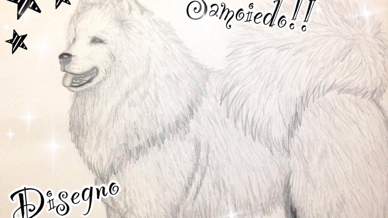 Disegno Samoiedo How To Draw Samoyed Art Drawing Dog Youtube