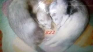 Прикольные и смешные картинки с животными под клип ТВОИ ГЛАЗА