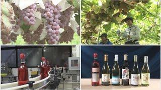 赤、白、ロゼ。ブドウの味と香りが口の中に広がるワイン。国産ブドウ1...