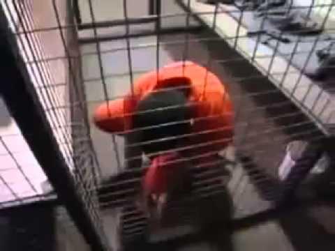Guantanamo war crimes