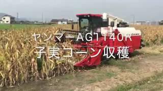 2016.9.2 岡山市南区藤田圃場 とうもろこし収穫 子実コーン ヤンマー普...