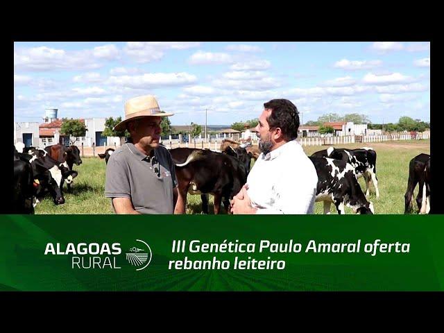 III Genética Paulo Amaral oferta rebanho leiteiro de alto nível genético e produtivo