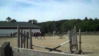 Morgan & Rookie fall at 8/2012 Cutter Horse Show