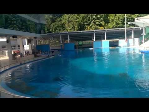 Dolphin show at Sentosa Singapore
