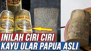 Download Mp3 Wajib Tonton!!! Inilah Ciri Ciri Kayu Ular Papua Asli Dan Khasiat Untuk Kejantan