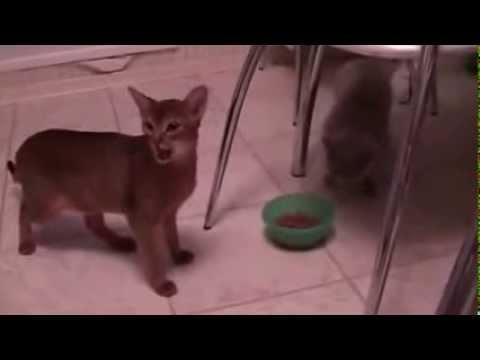 Smart Cat Wants to Eat
