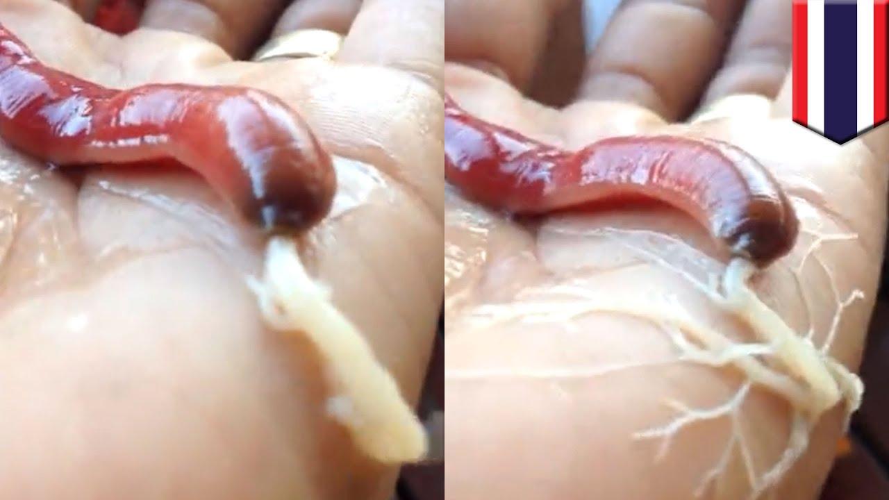 How long girl sperm lives