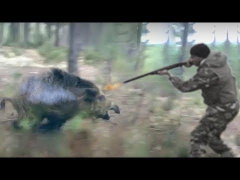 TOP 10 ANIMALS ATTACK HUNTER  Buffalo, Lion, Leopard, Bear, Puma