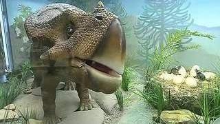 видео Квесты для детей по Дарвиновскому музею