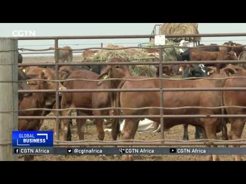 Brazilian Meat Scandal: Can African countries fill the supply gap left by Brazil?