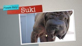 Suki - Fundraiser