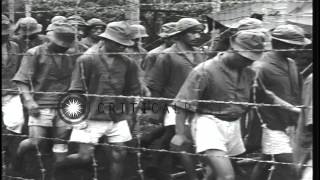 US 2nd Marine Raiders Battalion and Japanese prisoners in Guadalcanal, Solomon Is...HD Stock Footage