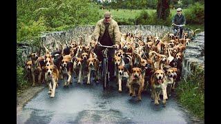смешное наша ферма собаки