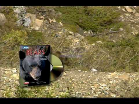 Bears of Our National Parks DVD