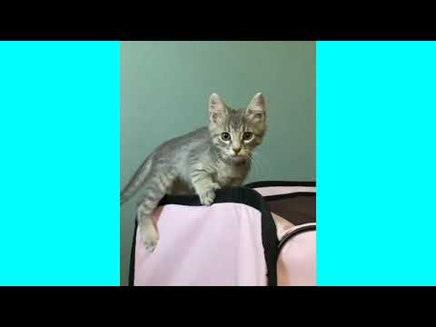 I want to bite you! Funny kittens 🤣 Cute Cats Playing😘😘😘 videos😘😘😘😘😘