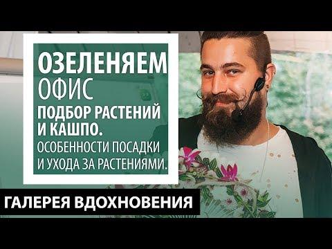 Озеленяем офис. Подбор растений и кашпо, флорист Андрей Филоненко