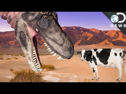 Why Aren't Modern Animals As Large As Dinosaurs?