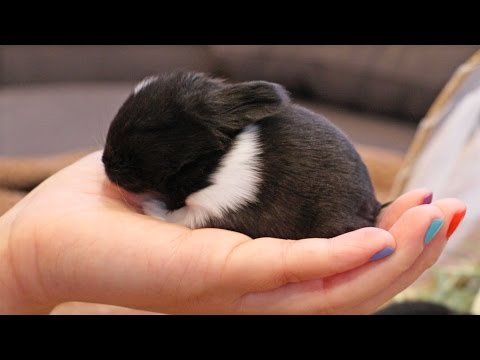 Newborn Baby Bunny Loves to be Held