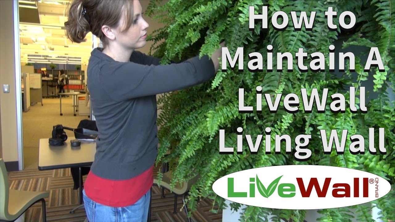 Indoor Garden Wall How to maintain the livewall indoor living wall system youtube how to maintain the livewall indoor living wall system workwithnaturefo