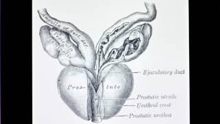 prostata wikipedia español
