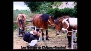 foire aux bestiaux 2011
