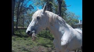 США. Америка. Лошадиная ферма 1 . Разведение лошадей. Конный завод.