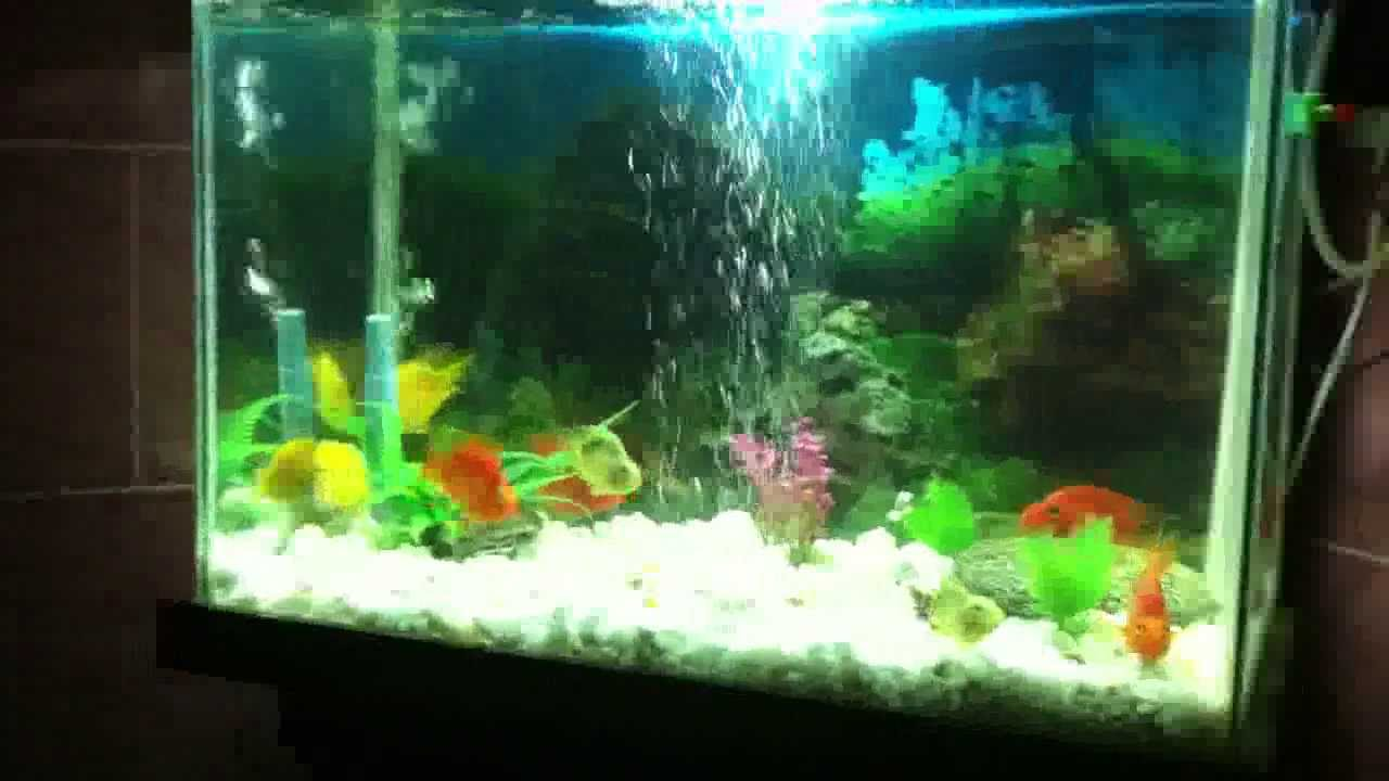 Fish Aquarium For Sale In Realy Good Price Youtube