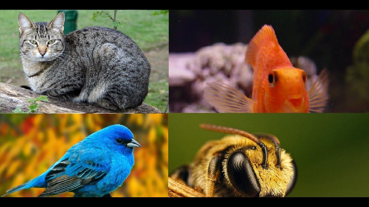 Смешные рожицы животных картинки