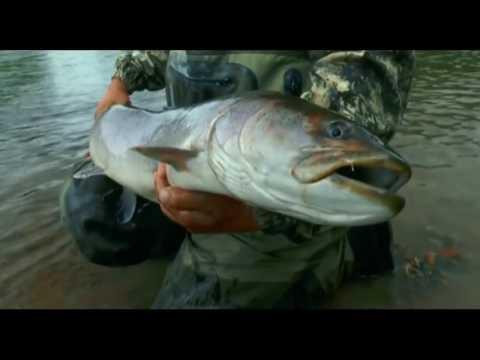 Рыбалка на Амуре. Ловля редкой амурской рыбы