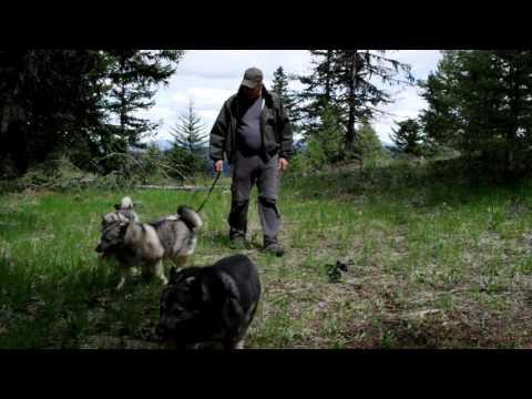 Offleash Dog Training Basic Concepts