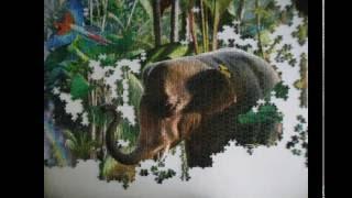Animals in the Jungle 9000 Pc Puzzle