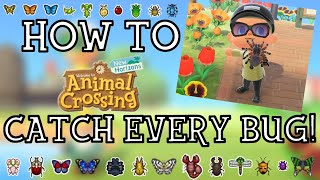 How To Catch Every Bug in Animal Crossing New Horizons - New Horizons Bug Guide - ACNH Insect Guide