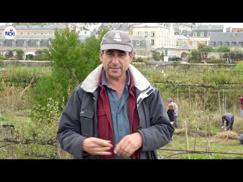 Le potager du Roi de Versailles, un jardin au naturel avec Noé