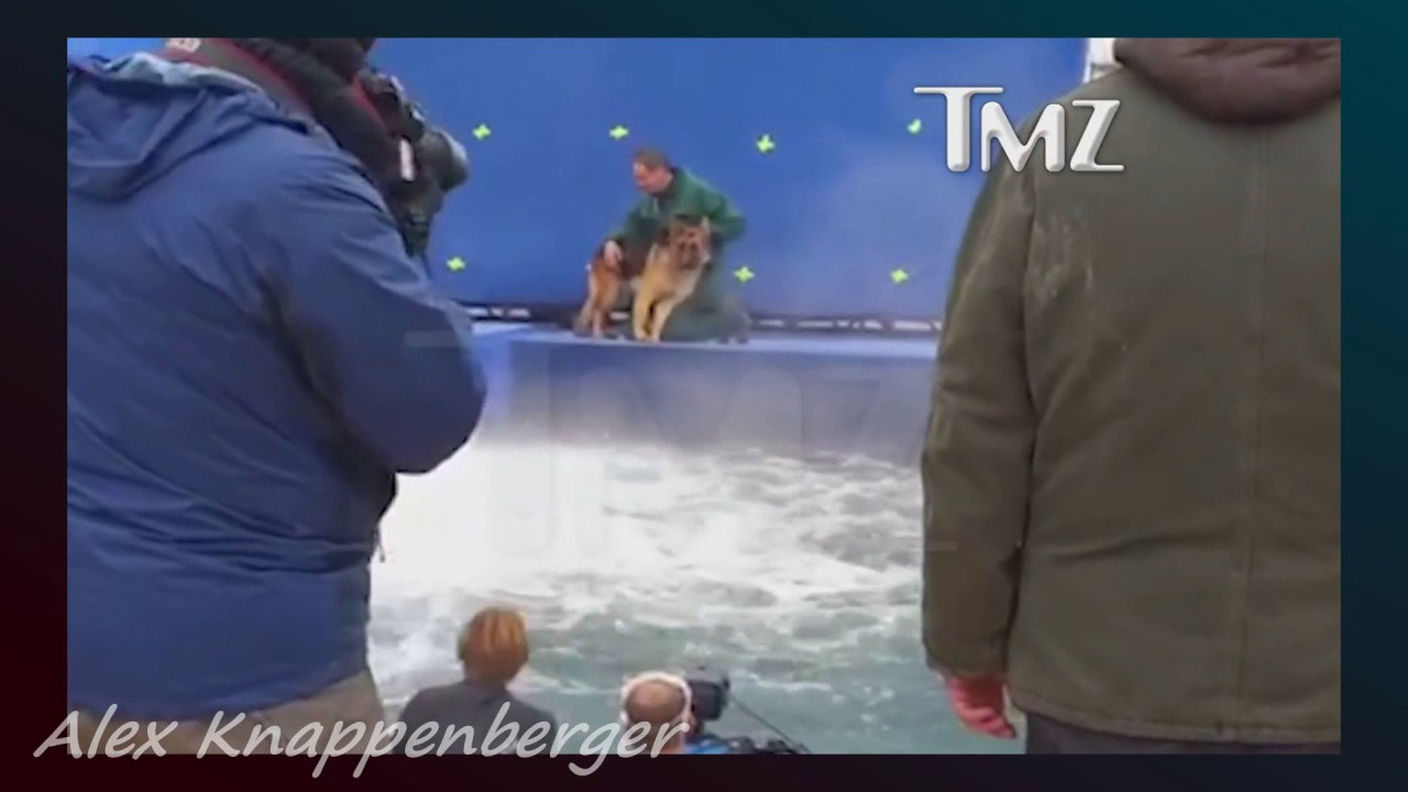 A Dog S Purpose Scared Dog Video