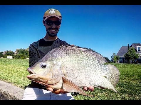 SIGHT FISHING For GIANT TILAPIA & BLUEGILL + UNDERWATER FOOTAGE!