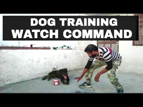 How To Teach Your Dog Watch Command !!  | dog training in hindi |