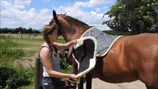 - REVUE - Amortisseur Esprit Equitation
