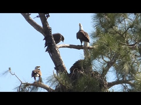 SWFL Eagles_Six Flights For Frequent Flyer E7, 3 Food Deliveries, Family Time 04-21-16