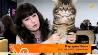 Глазами животных. Выпуск №216. Международная выставка кошек в ТЦ Башкортостан.