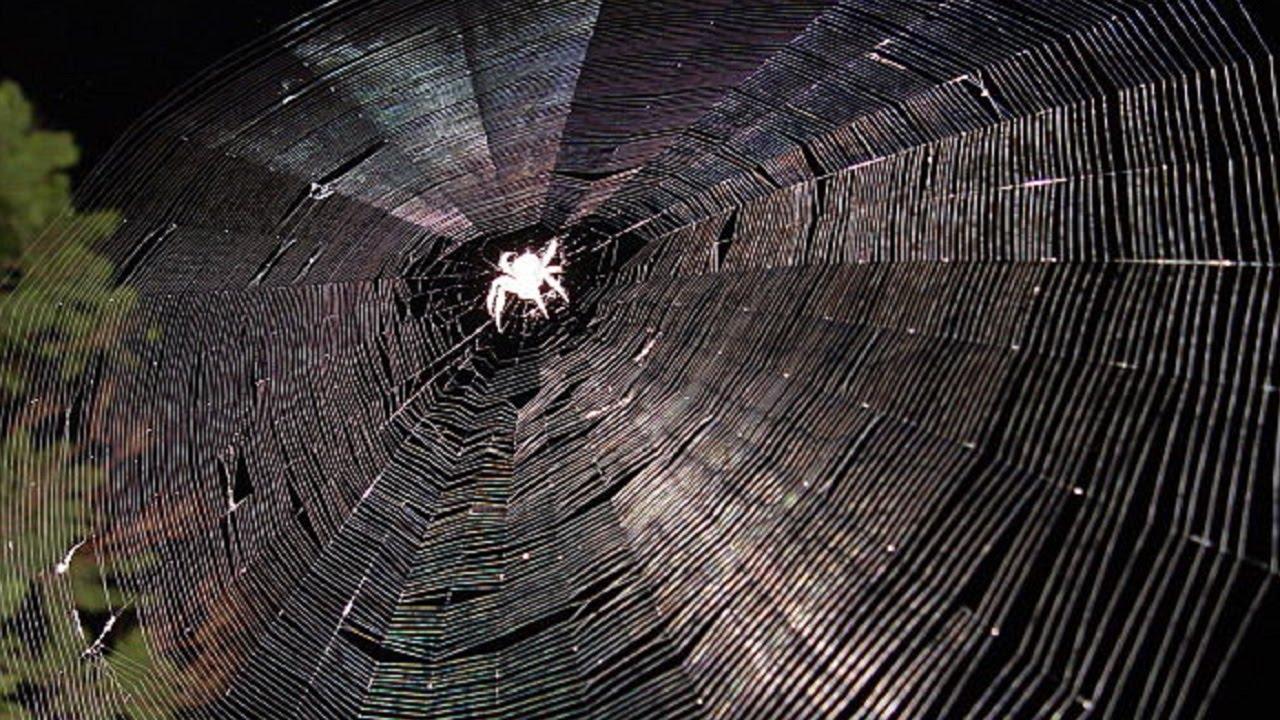 Почему пауки плетут паутину? Интересные факты про паутину. Паутина и пауки