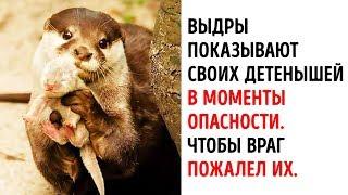 20 Фактов о Животных, от Которых вы Растаете от Умиления