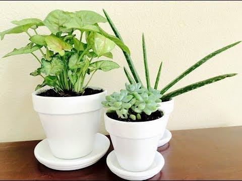 Как правильно РАССТАВИТЬ ЦВЕТЫ в доме. Лучшие и худшие места для комнатных растений