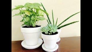 видео Комнатные растения в интерьере квартиры