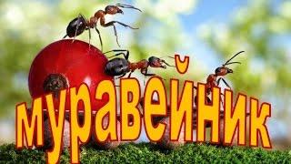 видео Экологическая викторина