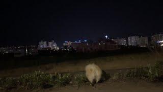 라테나 | 밤산책, 안녕 나는 라떼고 얜 매실이야  ;…