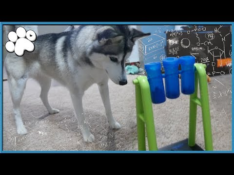 DOGGY IQ TEST Level 2! - How Smart Is My Dog?
