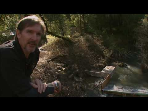 California's Lost Salmon - KQED QUEST