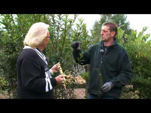 Fassbender Tenten Ratgeber : Gartencenter Baumschnitt