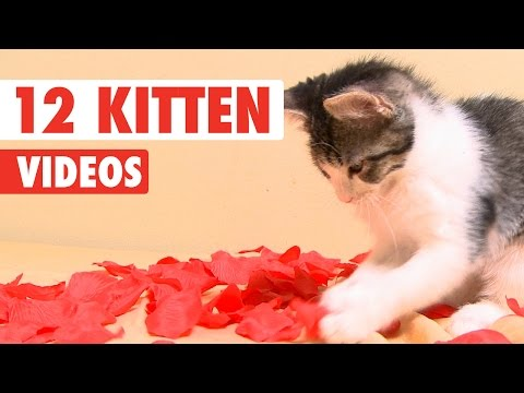 12 Kitten Videos Compilation 2016